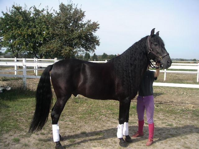 photo de cheval a vendre pas cher