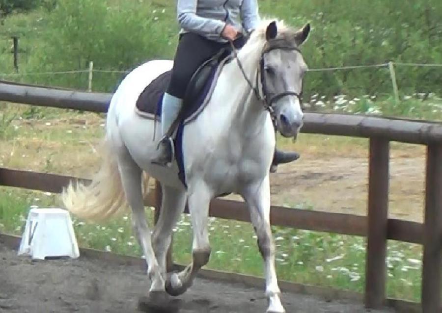 photo de cheval a vendre