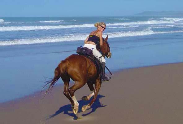 photo de cheval au bord de la mer