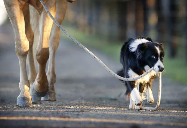 photo de cheval avec un chien