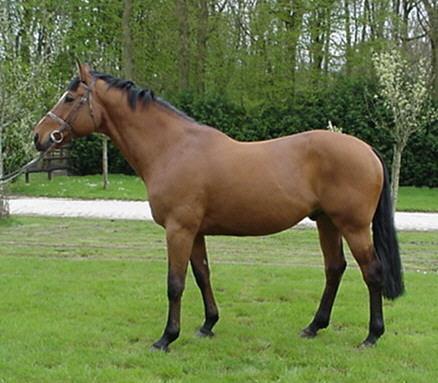 photo de cheval bai