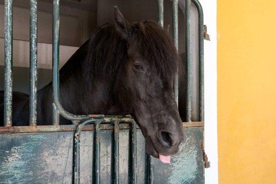 photo de cheval dans son box