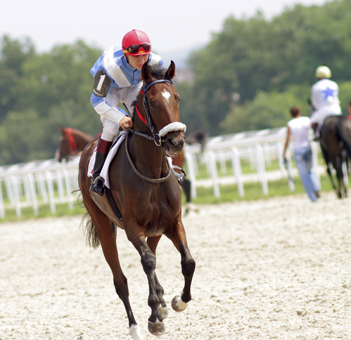 photo de cheval de course