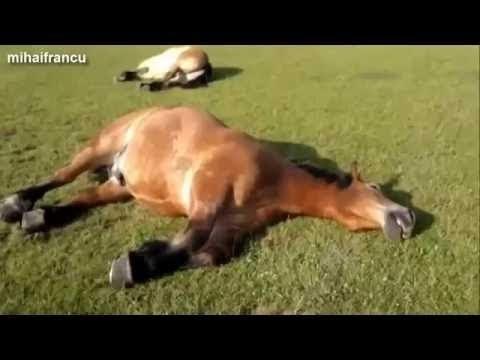 photo de cheval drole