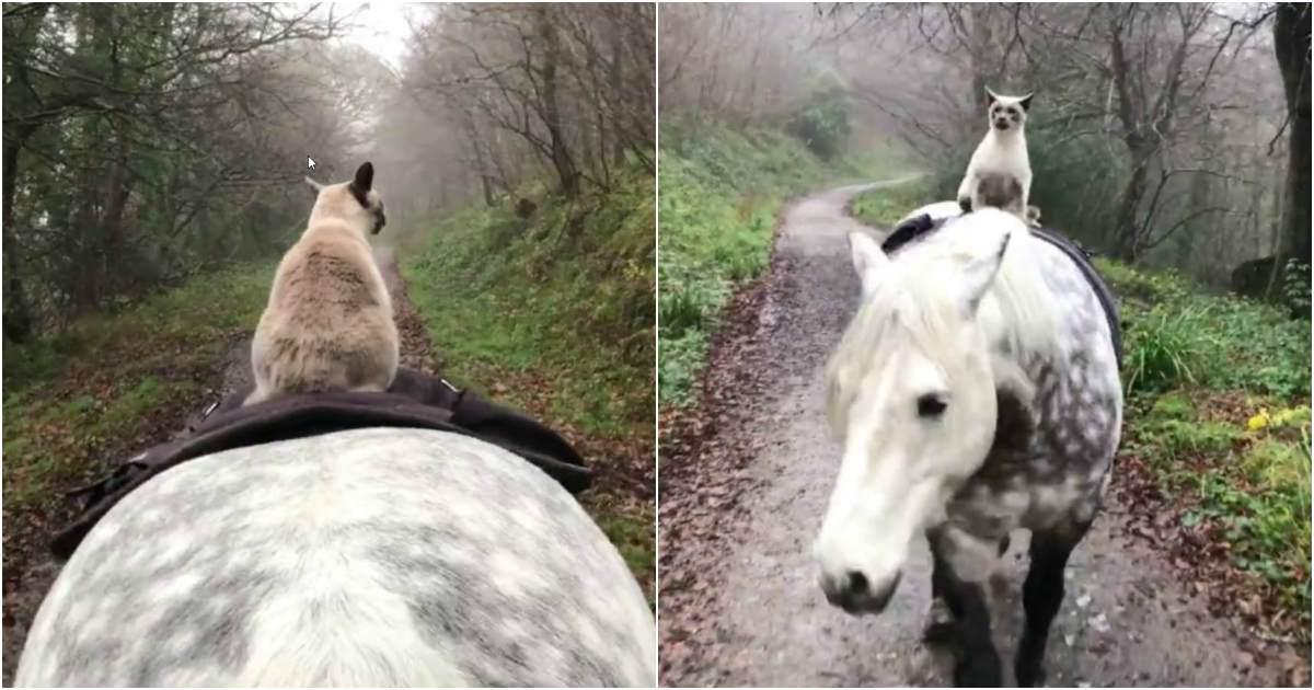 photo de cheval et chat