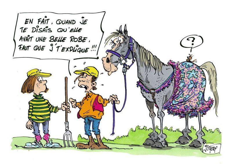 photo de cheval humoristique