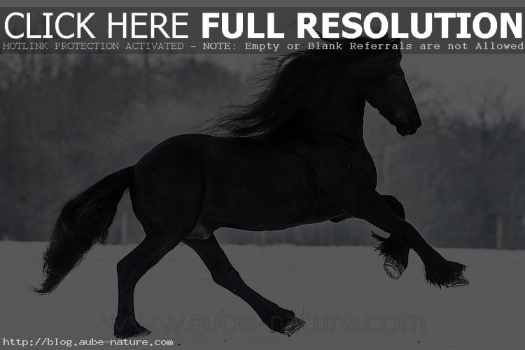 photo de cheval noir dans la neige