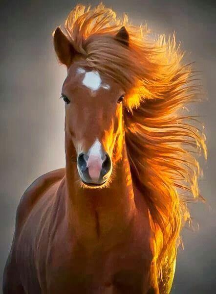 photo de cheval roux
