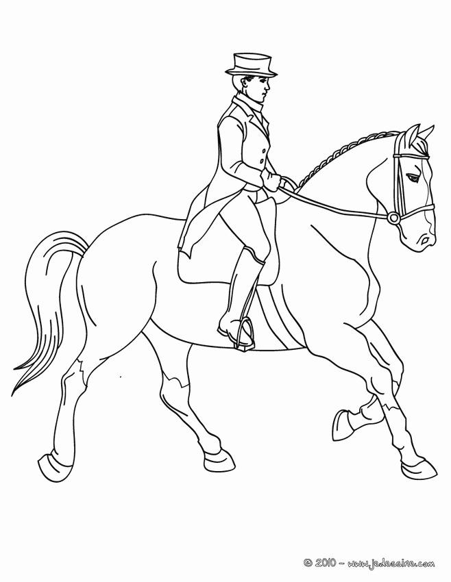 photo de cheval trop mignon