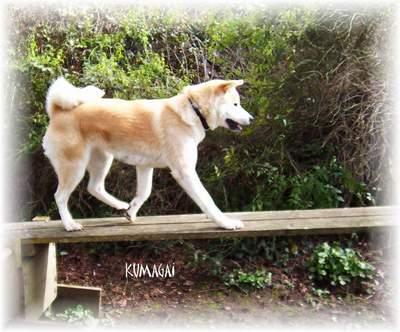 photo de chien 94