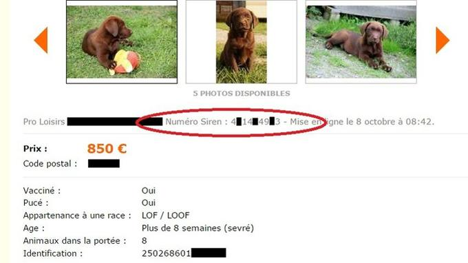 photo de chien a vendre gratuit