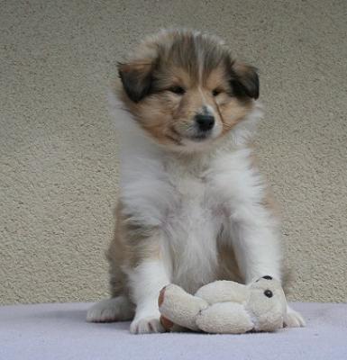 photo de chien a vendre pas cher