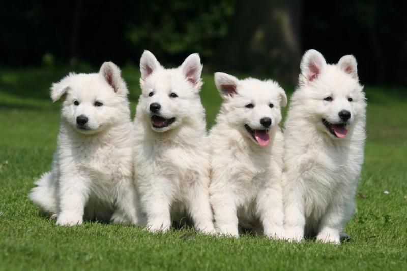 photo de chien beau