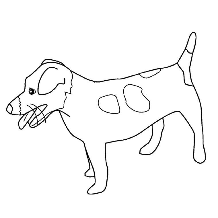photo de chien de chasse a imprimer