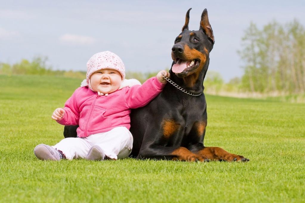 photo de chien de garde