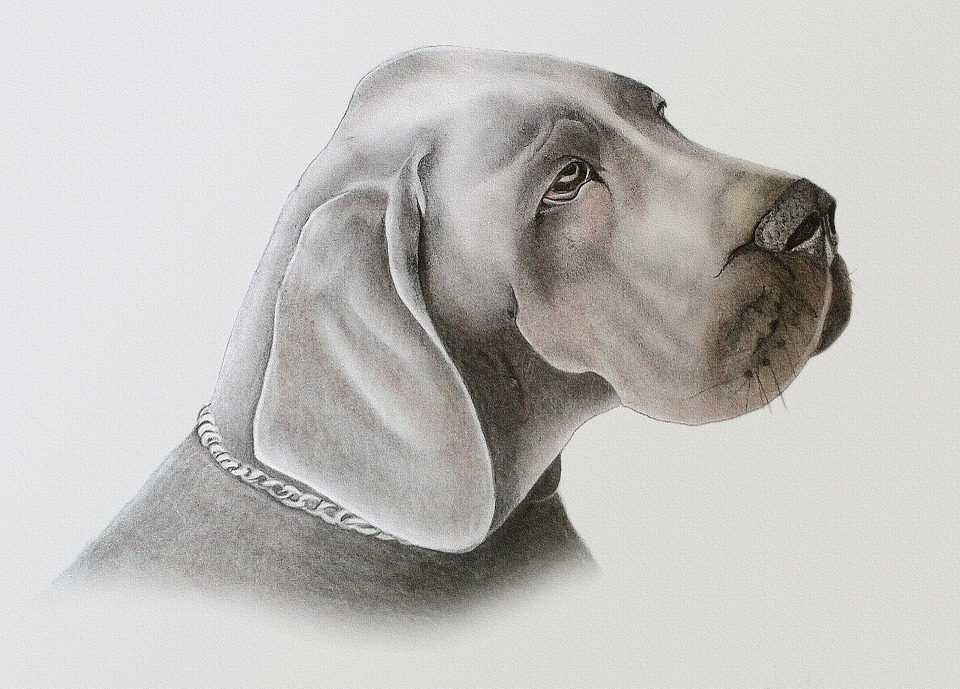 photo de chien en dessin