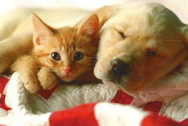 photo de chien et chat ensemble