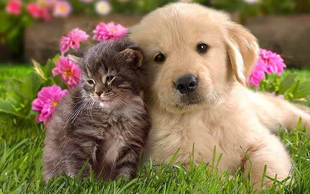 photo de chien et chat ensemble