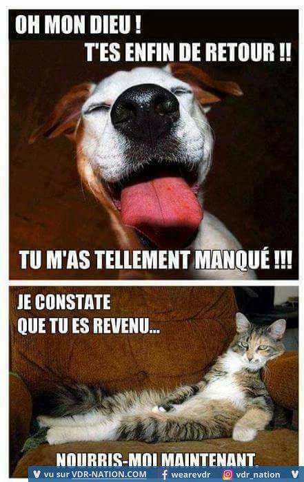 photo de chien et chat rigolo