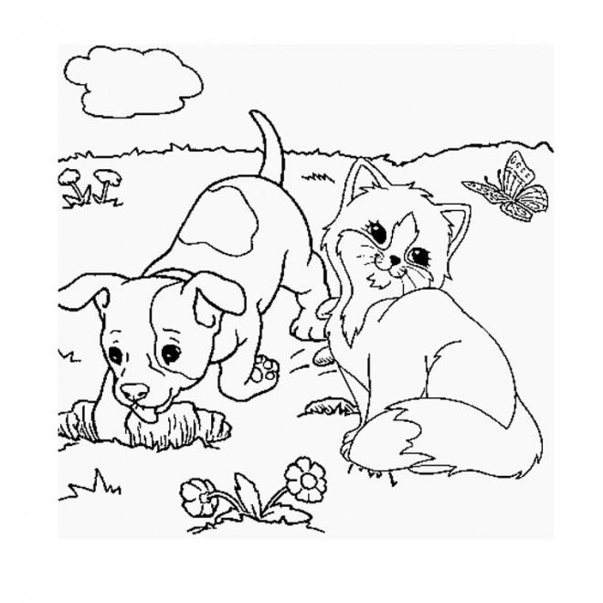 photo de chien et chat trop mignon a imprimer
