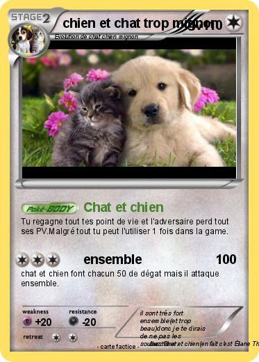 photo de chien et chat trop mignon