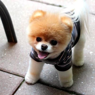 photo de chien facebook
