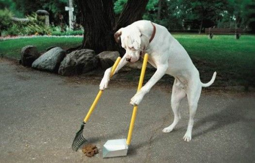 photo de chien faisant caca