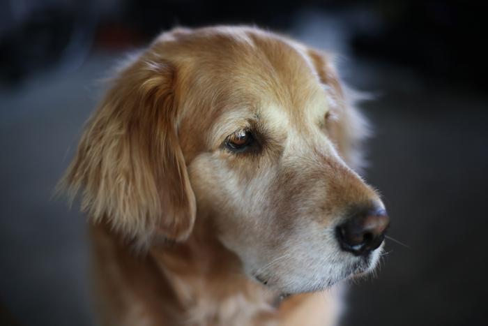 photo de chien hd