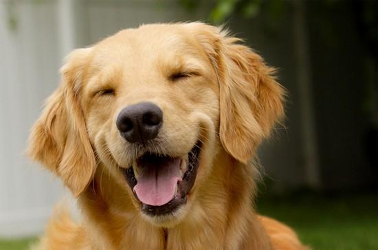 photo de chien heureux