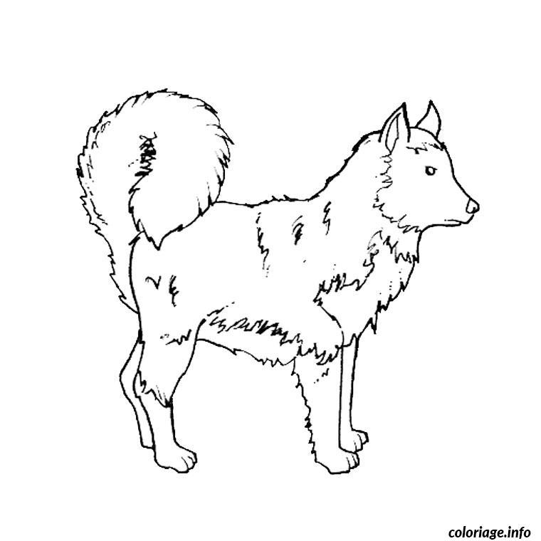 photo de chien husky a imprimer
