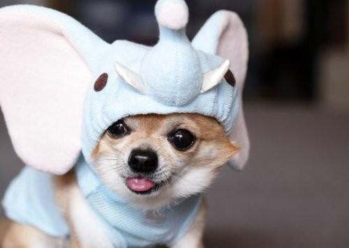 photo de chien kawaii
