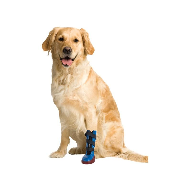 photo de chien moyen