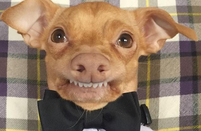 photo de chien pas beau