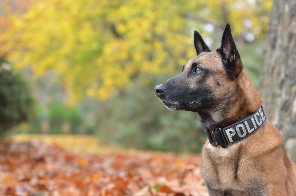 photo de chien policier