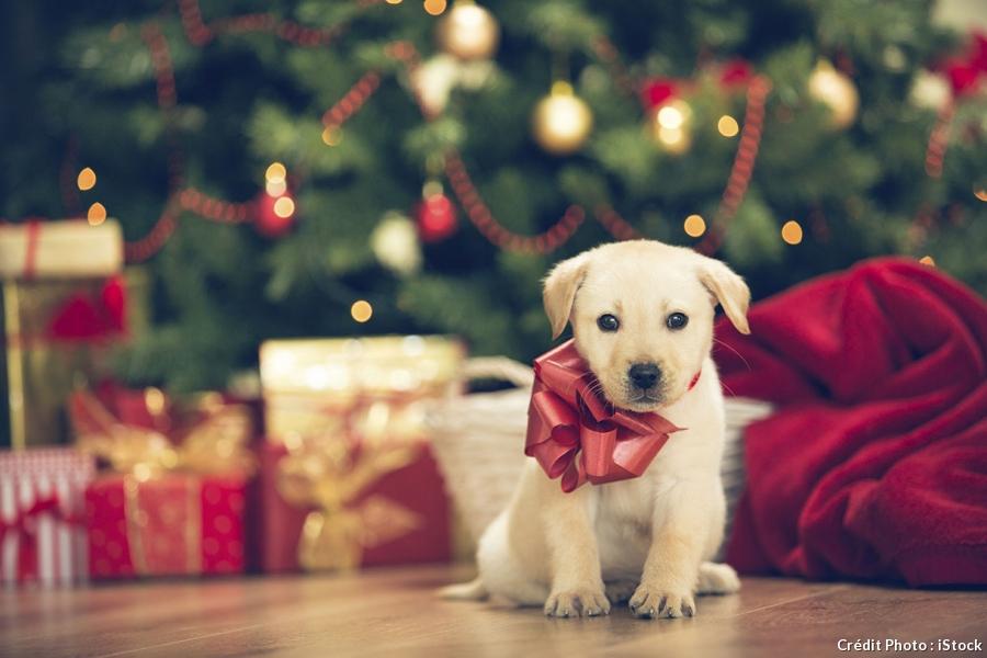 photo de chien pour noel