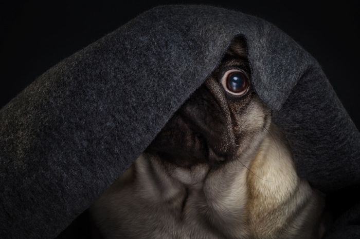 photo de chien qui a peur