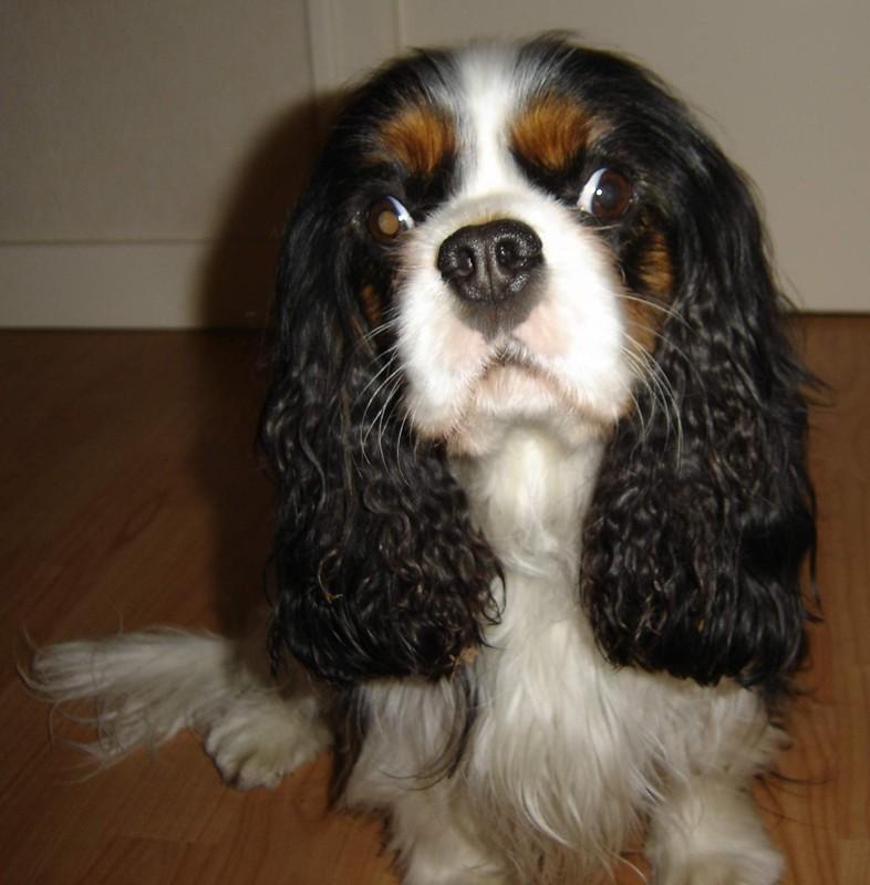 photo de chien qui louche