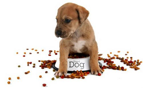 photo de chien qui mange