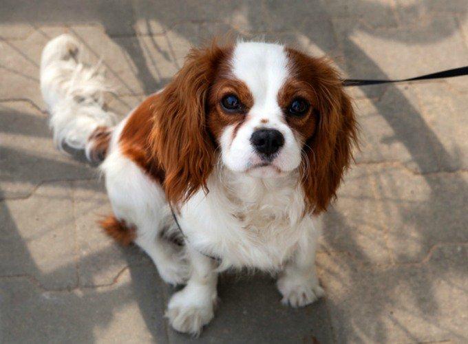 photo de chien qui reste petit
