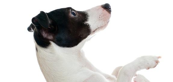 photo de chien qui s'embrasse
