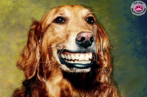 photo de chien qui sourit