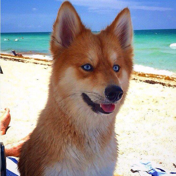 photo de chien renard