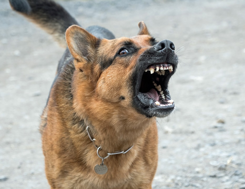 photo de chien tres mechant