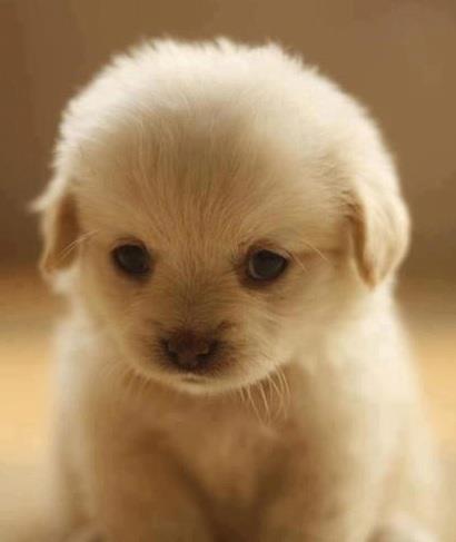 photo de chien trop craquant