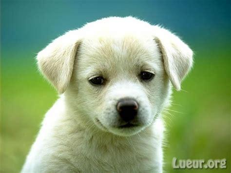 photo de chien trop mignon gratuit