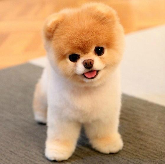 photo de chien trop mimi