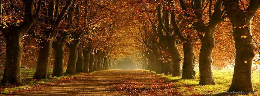 photo de couverture automne