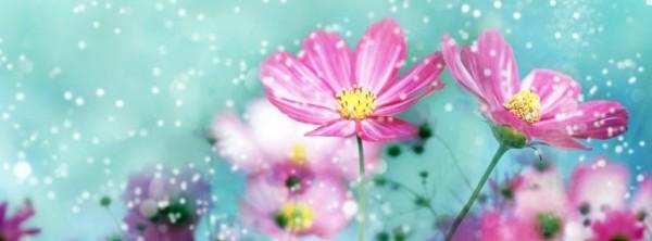 photo de couverture fleur