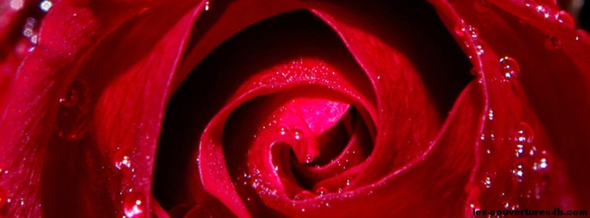 photo de couverture rose rouge