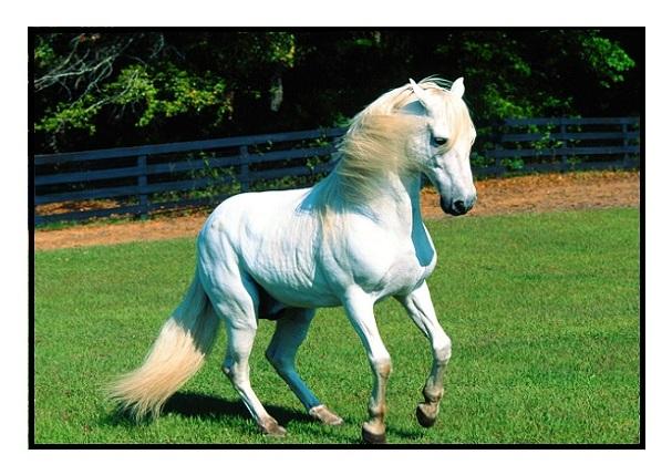 photo de cheval a imprimer gratuit - Photos de nature